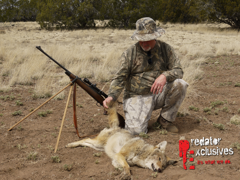 Predator Exclusives' coyote hunter looking at his first coyote.