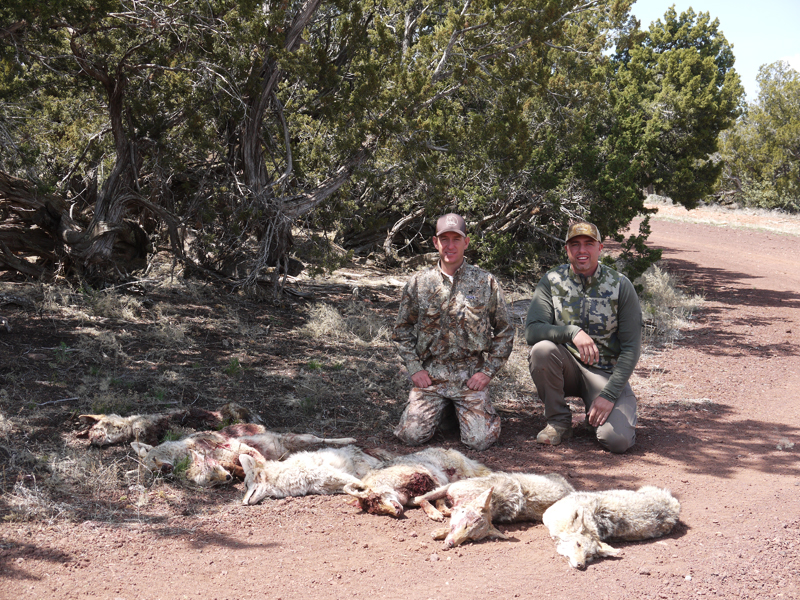 Lee Murphy & Craig Steele with 7 coyotes taken in mid-April during an invitational contest.